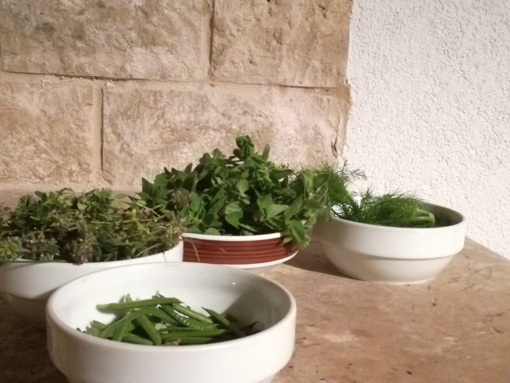Foraging and exploring susak on day 2 (behind the scenes)